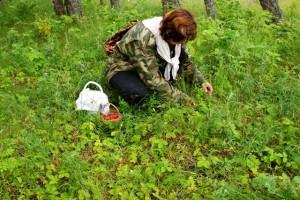 ягоды в лесу,сбор ягоды в лесу,сбор земляники